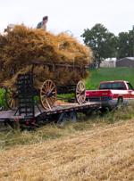 Rye Harvest-2